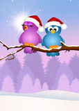 Birds at Christmas Royalty Free Stock Photo