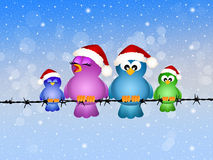Birds at Christmas Stock Image