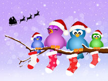 Birds at Christmas Royalty Free Stock Photos