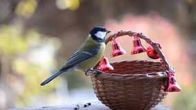 Birds in Christmas stock footage