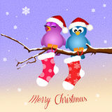 Birds with Christmas socks Royalty Free Stock Photography