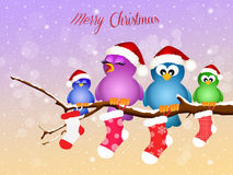 Birds with Christmas socks Royalty Free Stock Image