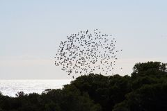 Birds in circle. Birds heading south Stock Images