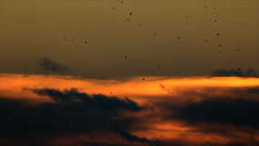 Birds circling at evening sky. Birds circling at background evening clouds on the sky stock video