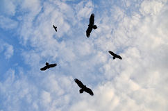 Birds circling in the sky. Silhouettes of birds circling in the sky stock photos