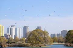 Birds and city