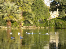 Birds in Ciutadella Park Stock Photography