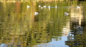 Birds in Ciutadella Park Royalty Free Stock Images