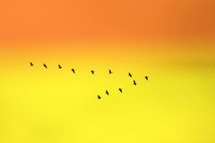 Birds in classic. V formation Royalty Free Stock Photos