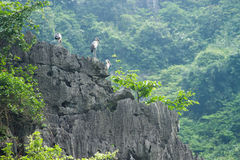 Birds on the cliff Royalty Free Stock Photo