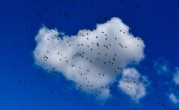 Birds on a cloud. A flock of ducks on a heart shaped cloud Royalty Free Stock Images