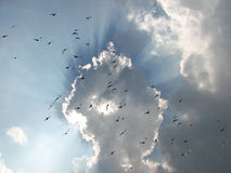 Birds and clouds in sky stock photo