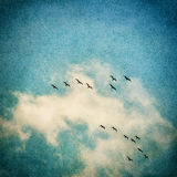 Birds and Clouds Royalty Free Stock Photo