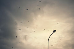 Birds on cloudy sky Stock Images