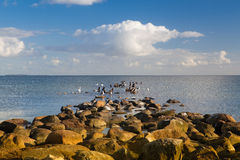 Birds on the coast of the Batlic Sea, Ruegen Island Royalty Free Stock Photos