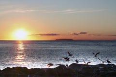 Birds on coast at sunset. Birds on the coast of an ocean with the summer sunset on the horizon Royalty Free Stock Photo