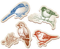 Birds collection. Hand drawn birds paper stickers Royalty Free Stock Photos