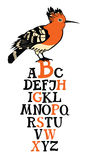 Birds collection Alphabet with Hoopoe bird Stock Photography