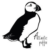 Birds collection Atlantic puffin Black and white vector Royalty Free Stock Images