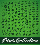 Birds Collection Stock Photo