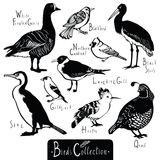 Birds collection Black Stork Goldfinch Laughing Gull Quail Hoopoe Royalty Free Stock Photo