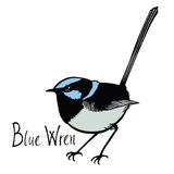 Birds collection Blue Wren Color  Royalty Free Stock Images