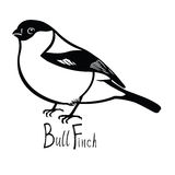 Birds collection Bullfinch Black and white  Stock Photo