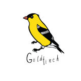Birds collection Goldfinch Color vector Royalty Free Stock Image
