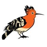Birds collection Hoopoe Color vector Stock Photo