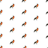 Birds collection Hoopoe Colorful seamless pattern. Set Royalty Free Stock Images