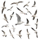 Birds collection isolated Stock Photo