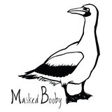 Birds collection Masked Booby Black and white vector. Object Royalty Free Stock Photography