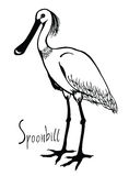 Birds collection Spoonbill Black and white vector Stock Photo