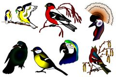 Birds color collection  Royalty Free Stock Photos