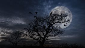 Birds coming into roost in a tree at full moon on a winter evening. Birds coming into roost in a tree at full moon royalty free stock photography