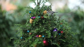 Birds compete on Christmas tree Stock Photography