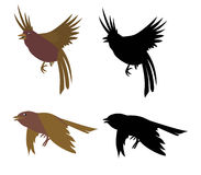 Birds. Contour image Stock Images