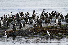 Birds - Cormorant Colony Stock Photos