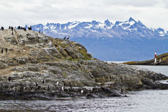 Birds - Cormorant Colony. Cormorant Colony On An Island In The Beagle Channel - Tierra del Fuego - Argentina - Chile - Travel Destination Royalty Free Stock Photo