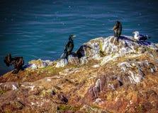 Birds, cormorants, guls in Toledo Royalty Free Stock Photos