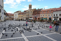 The birds on the Council Square. Royalty Free Stock Image