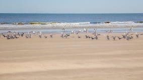 Birds on Cumberland Island Royalty Free Stock Images