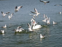 Birds on Curonian Lagoon shore Royalty Free Stock Photo
