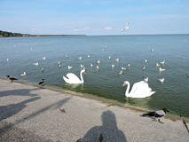 Birds on Curonian Lagoon shore Stock Photo