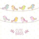 Birds cute Royalty Free Stock Photos