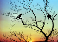 Birds in Tree  at Dawn Royalty Free Stock Photography