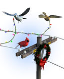 Birds Decorating for Christmas - with clipping path royalty free illustration
