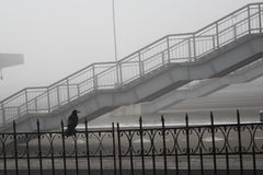 And stairs in the fog pedestrian bridge. Birds do not fly in fog and the Raven sits and thinks where to go destinations no details not a clear difference stock photo