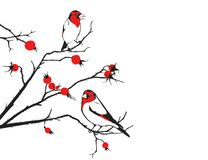 Birds and dog rose. Vector illustration of birds and dog rose Royalty Free Stock Images