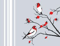 Birds and dog rose. Vector illustration of birds and dog rose Stock Image
